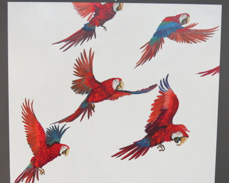 Scarlet Macaws - Jenny Keith